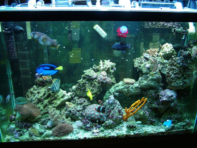 Fish for 10000 gallon fish tank